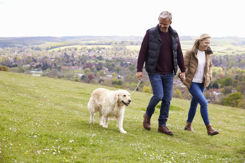 Mature,Couple,Taking,Golden,Retriever,For,Walk